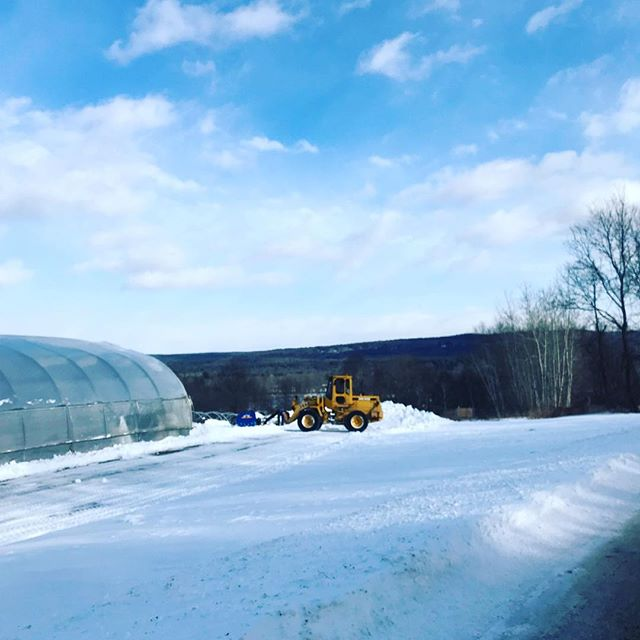 Thanks to Mark U for clearing this snow last week! If you hadn't made time for the farm, we'd still be shoveling!