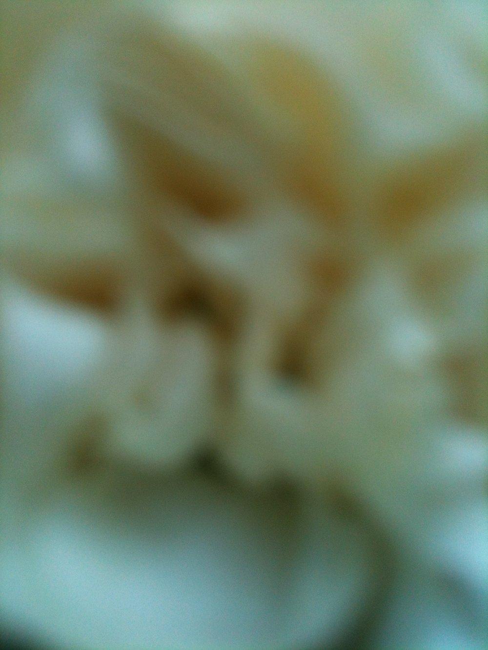 IMG_1726.jpg