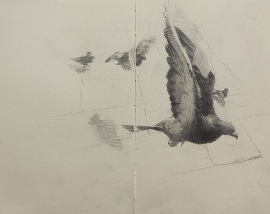 sketch_pigeons_01.jpg