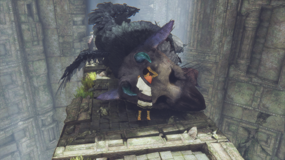 Take care of Trico and he'll take care of you.