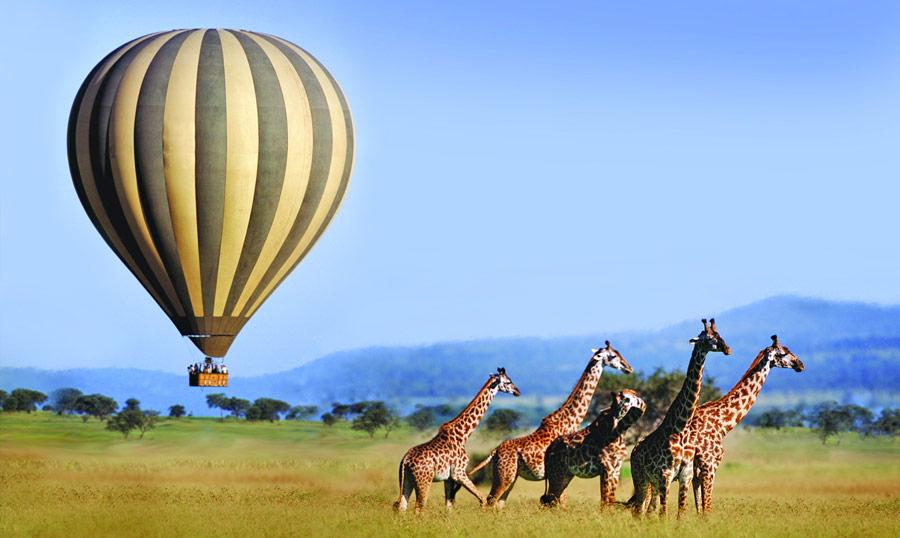 Seeing tall giraffes from the hot air balloon