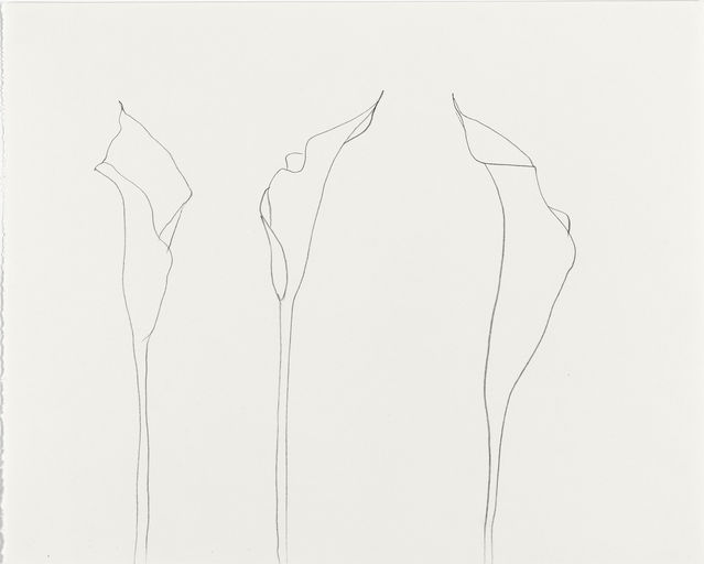 Ellsworth Kelly, Calla Lily, 2007.