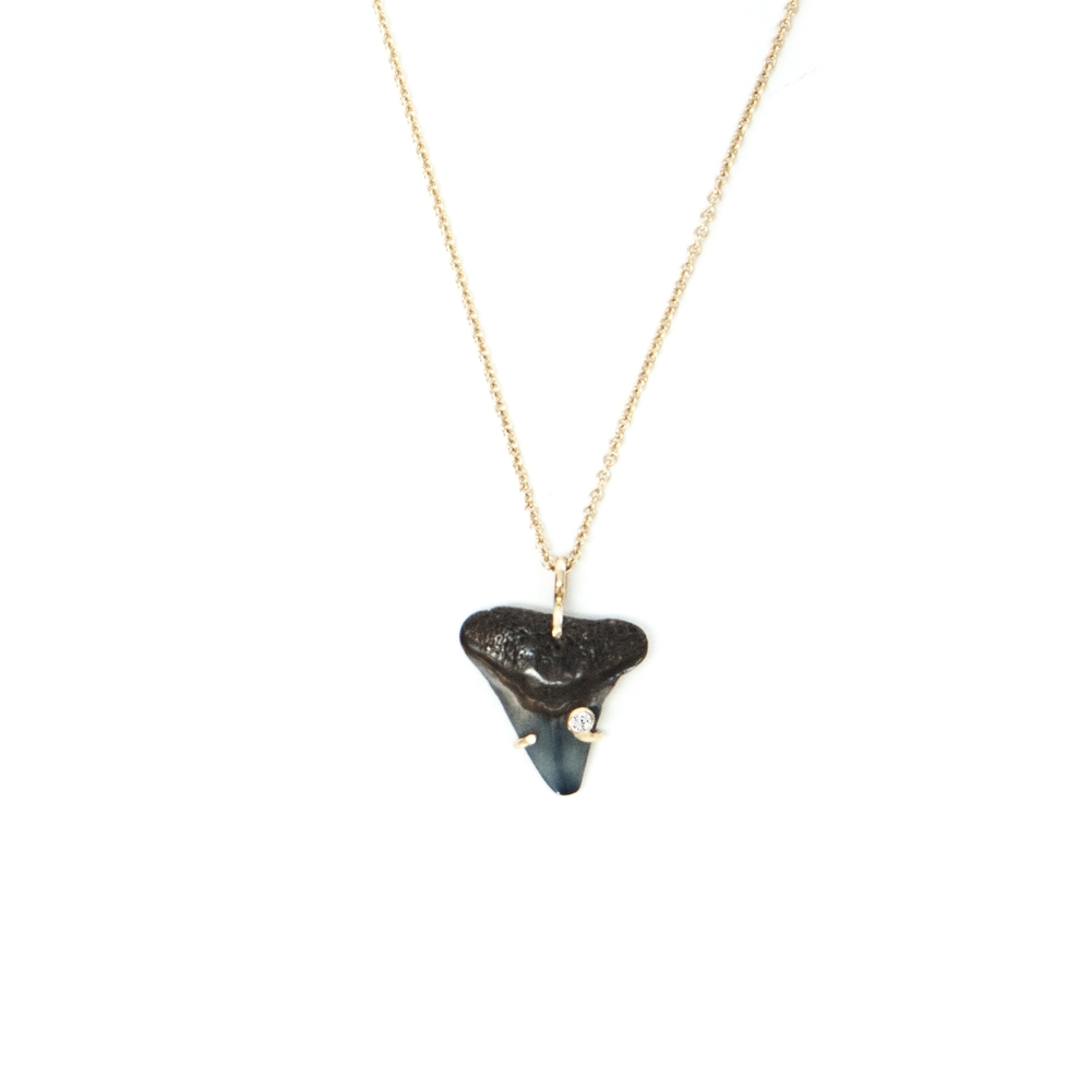 14k shark tooth necklace with mm