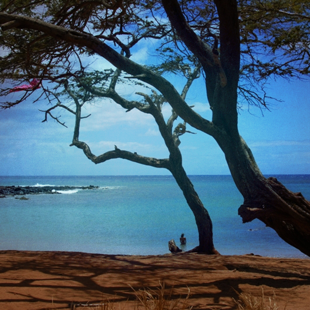 Molokai, Hawaii sure has idyllic trees. Pam Mandel.