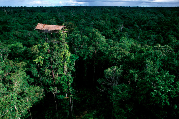 korowai tree houses west papua unusual homes