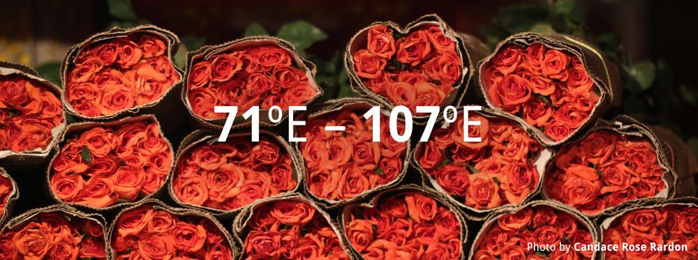 71-107-E.jpg