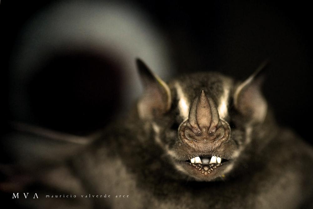 Fotografías por Mauricio Valverde en el Crandell Reserve.