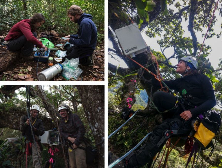 The 2016 dry season field team. Upper Left: Jess Murray and Andrew Glunk measure water potential of epiphyte leaves that were collected in the canopy and lowered to the ground. This measure gives us a sense of water use and water stress in canopy plants. Lower left: Keylor Muñoz, and Lex Darby install a transpiration station in the Curi Cancha Reserve to study water cycling in this lower elevation forest where cloud inundation is less frequent than in the Monteverde Reserve. Right: Sybil Gotsch finishes the installation of a transpiration station in the University of Georgia Field Station forest, which is our driest research site. Photo credits: Sybil Gotsch and Keylor Muñoz.