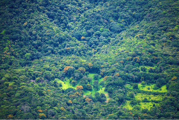 Aerial photo of a portion of Curi-Cancha Reserve.  Pasture in lower center is surrounded by O. m. trees in full flower. (Click to enlarge).