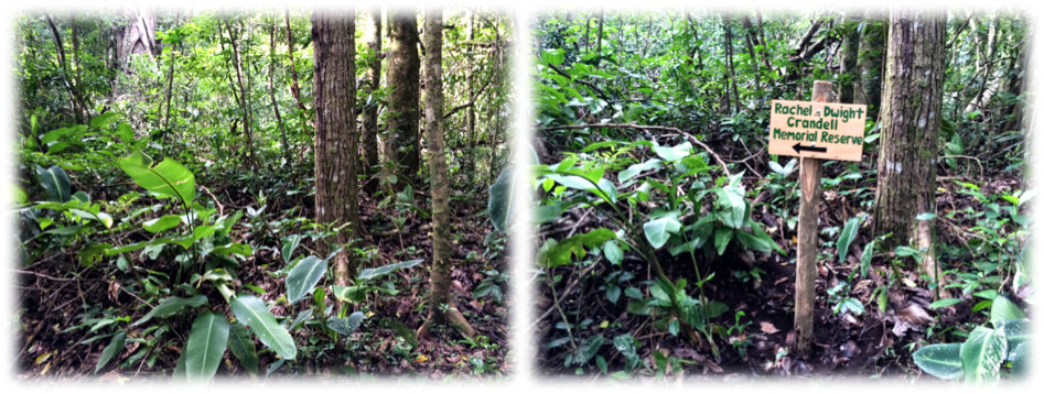 Before and after: These signs indicate the way to get to the Reserve.  (Before and after placing the sign).