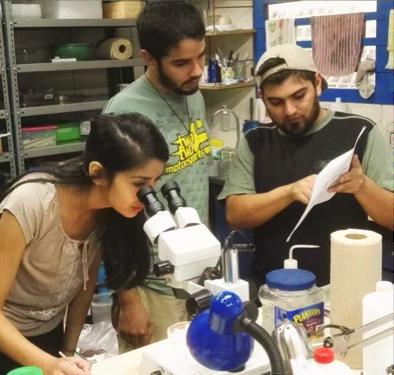 Equipo trabajando en laboratorio de Entomología, UNA.