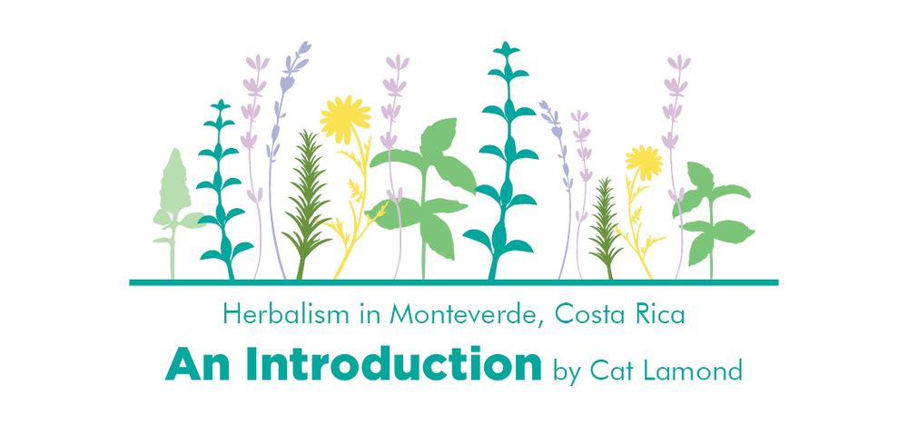 An Introduction by Cat Lamond Header.png