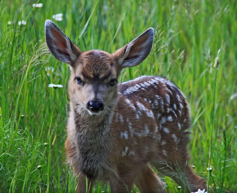 Bambi 1