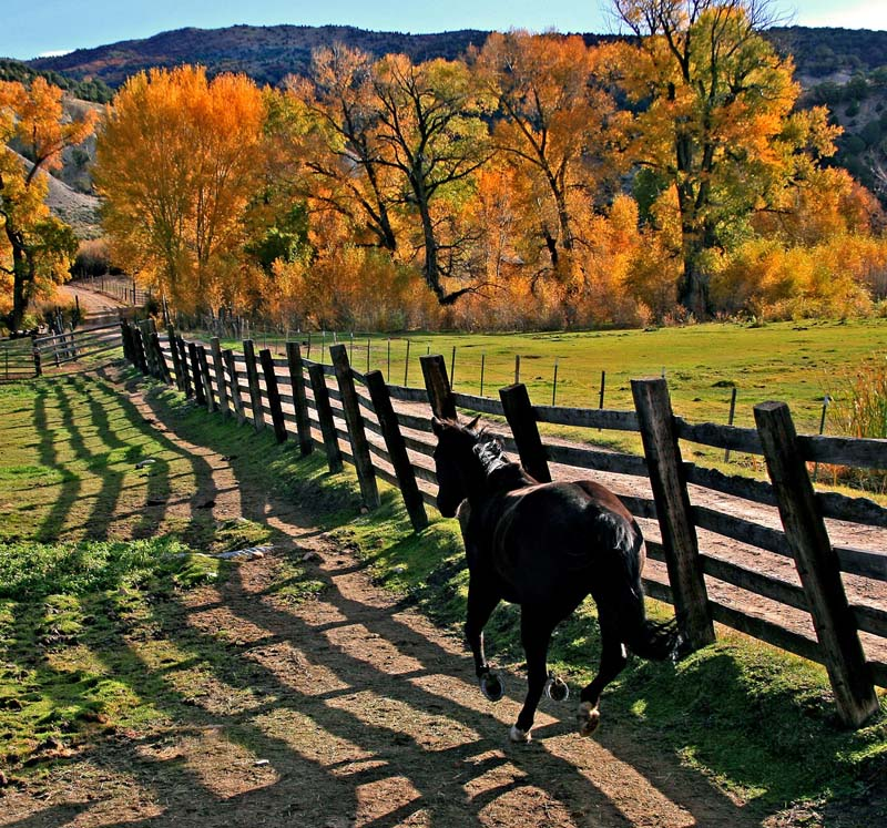 Horse & Fence in Fall