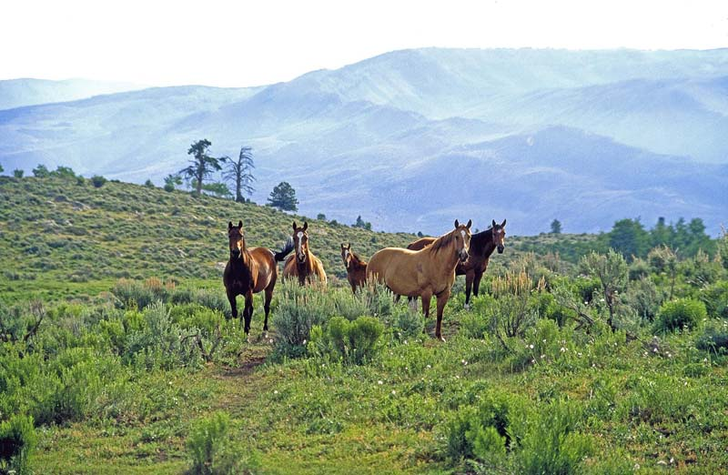 5 Horses, Diamond S Ranch