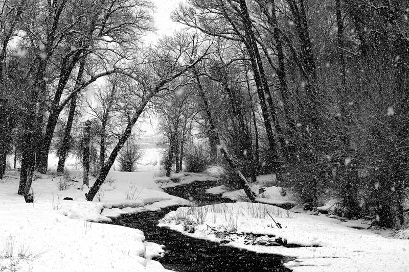 Brush Creek Winter