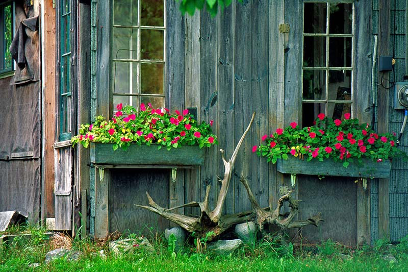 Maine Coast Barn & Flowers