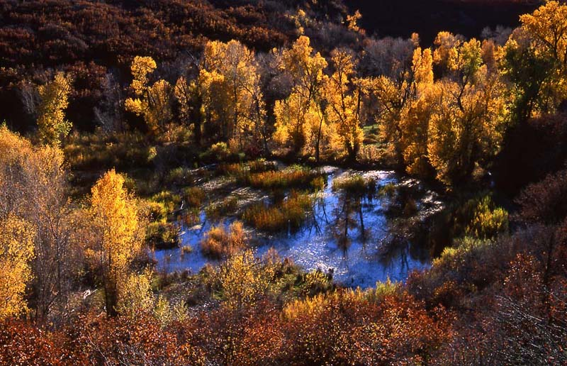 Pond in Fall, Crawford, CO