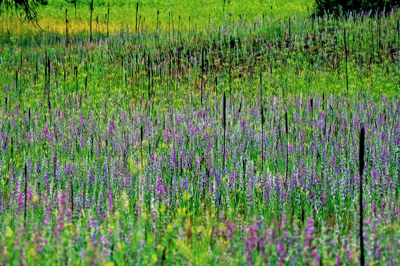 Monets Field of Flowers