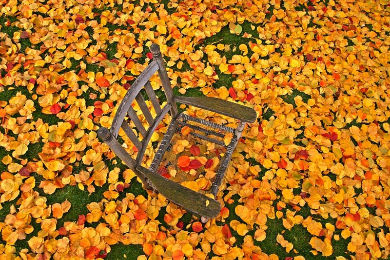 Fall Apricot Leaves & Chair