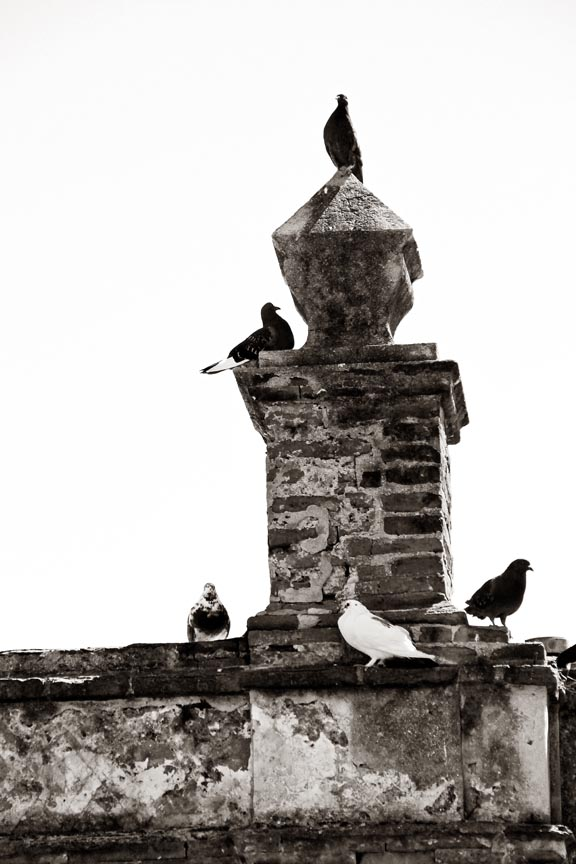 Pigeons at Rest