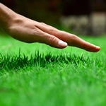 Fall seeding helps create a lush, thick lawn