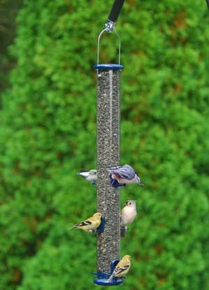 Bird Feeder DY.jpg