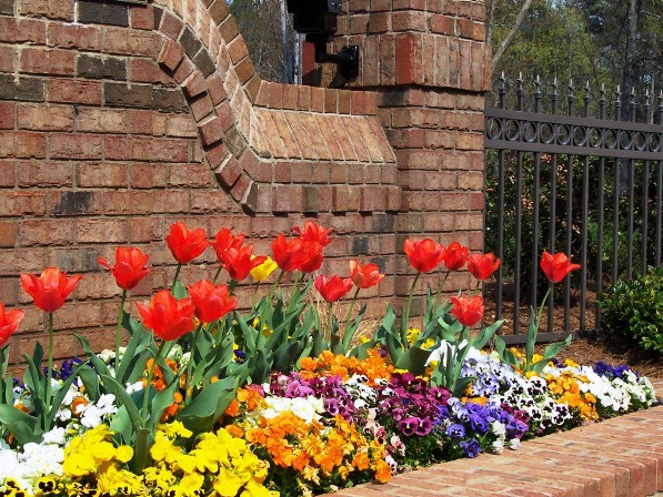 Plant Bulbs Now For Gorgeous Spring Color