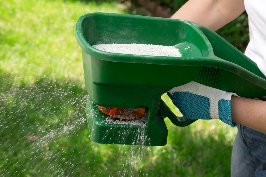 Fertilize your cool season lawn around Thanksgiving.