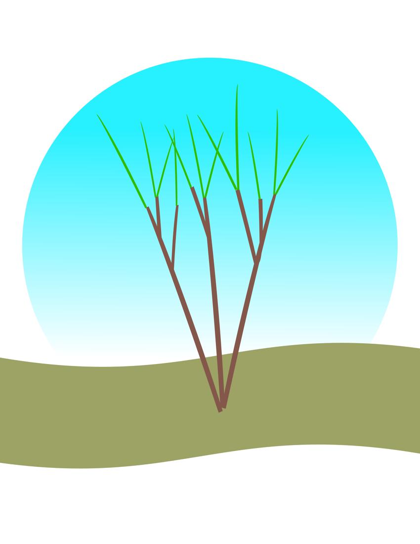 Crape myrtle repair, spring-summer