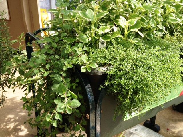 Container Herb Garden Workshop