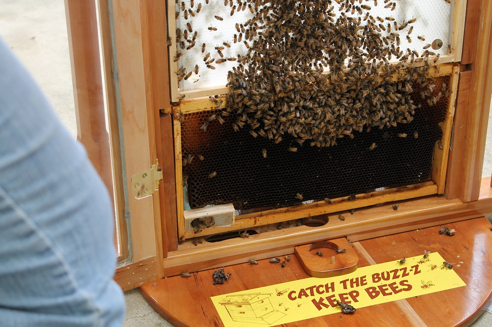 New Garden's observation hive being installed (don't worry, we keepit closed!)