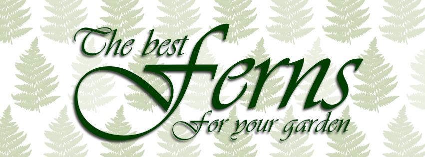 The Best Ferns for your Garden