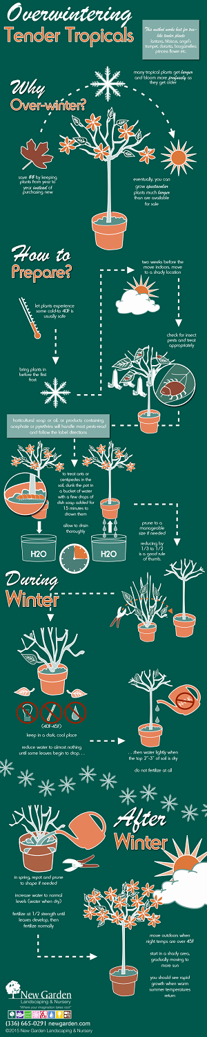 Infographic_Overwintering Tropicals_FS thumb.png