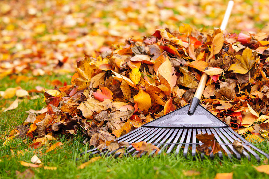 Get those leaves off the lawn, but after that...maybe you're done?