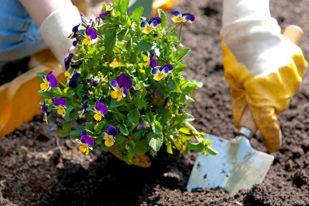 Prepare your soil before planting