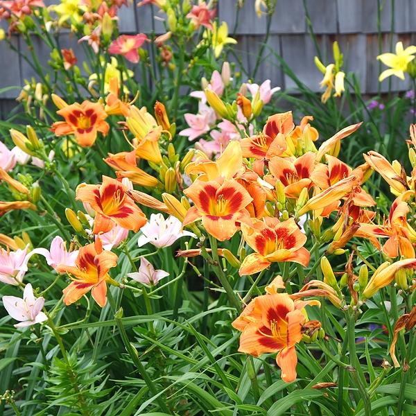 Spring in the Garden!