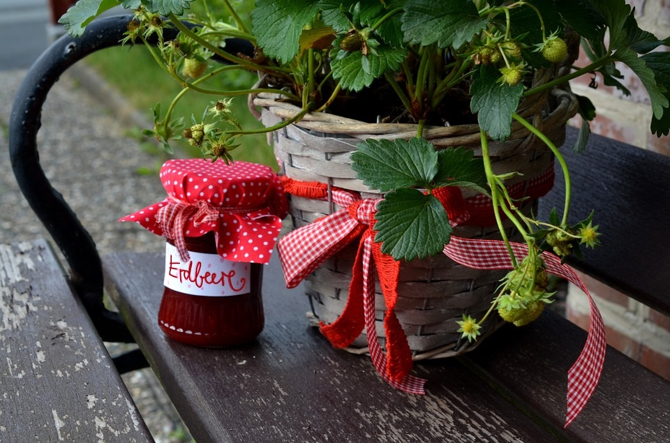 Strawberries are suited for container gardening