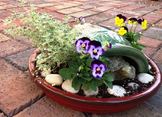 Silver thyme and violas make up this simple mini garden.