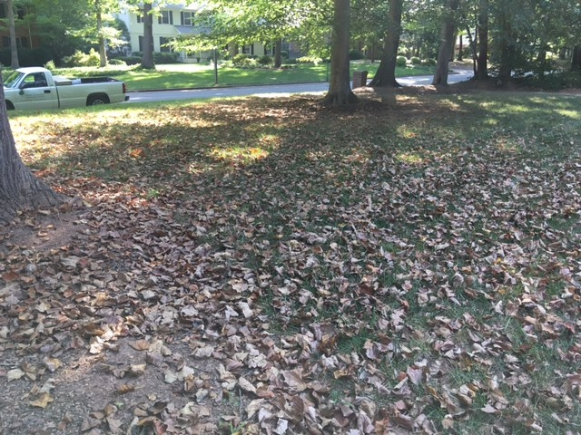 The ground looks like fall, but this is July