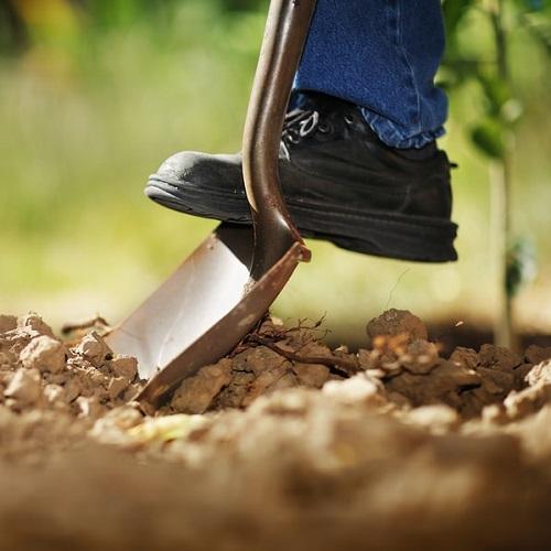 Retail Planting -