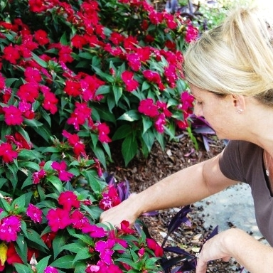 "Flower Program - Imagine worry-free seasonal color plantings enhancing your home or business. By implementing our ""colorscape"" program, we can plan, install, and maintain a landscape that offers you year 'round blooming color.We can design a bed of subdued elegance or attention-grabbing colors and textures to suit your preference.  All of our flower bed plant selections are chosen for great performance so your planting looks better longer."