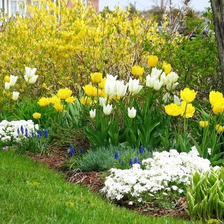 bigstock_Spring_Garden__106344-min.jpg