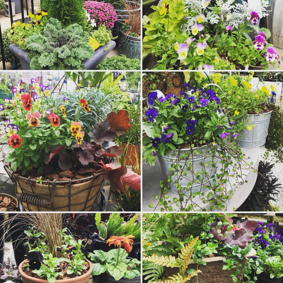 Fall Container collage.jpg