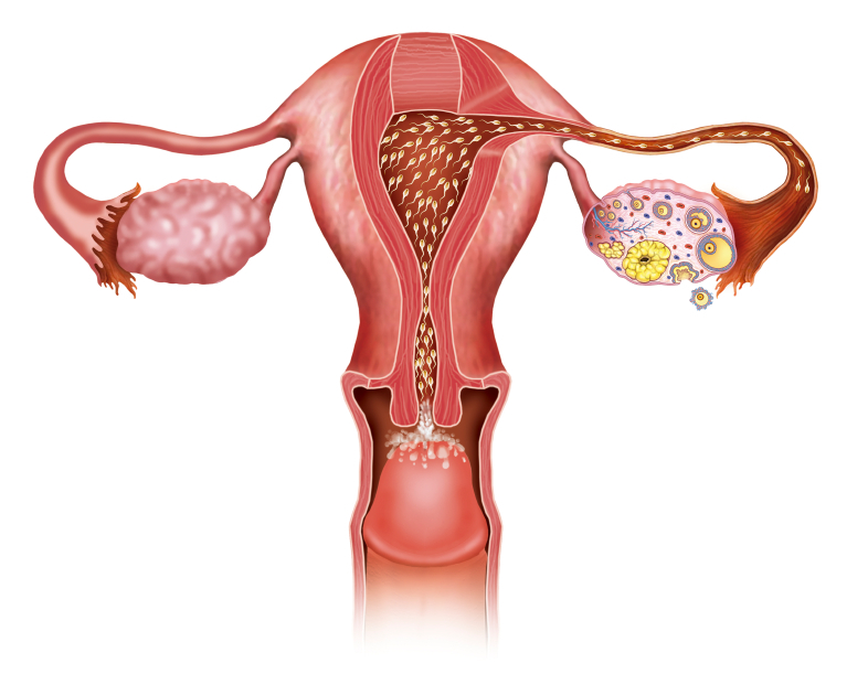 Uterus-Conception-Fertility-Atlanta.jpg