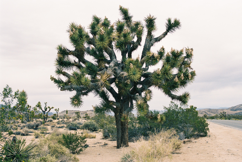 and then there was Joshua Tree. one of the most expansive, glorious places I've ever been.
