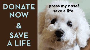 Donate button Muttville Senior Dog Rescue