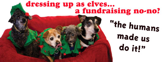 Animal Rescue Marketing Fundraising Tips