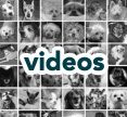 click to watch examples of great videos