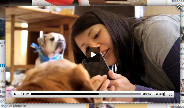 Check out the AT&T Article about Happy Hounds Massage and Muttville, then watch the video!